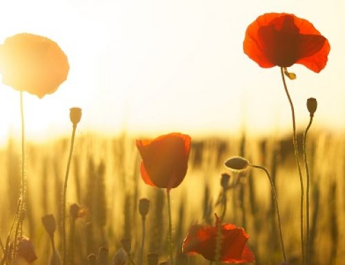 Anzac Day – a short and important history