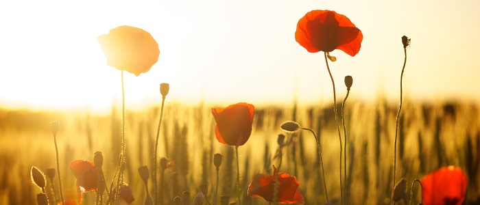 Anzac Day - a short and important history